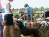 malta-okeanas-2-9-dogs-in-junior-class-ring