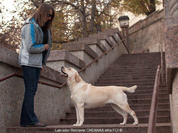 city-and-dog-zagreb-10-kanga-gorska-fantazja-oki