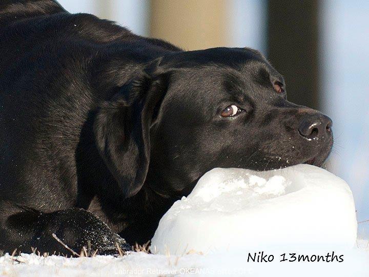niko-after-cacib-show-13-02-2011-in-talinn-jn-winn