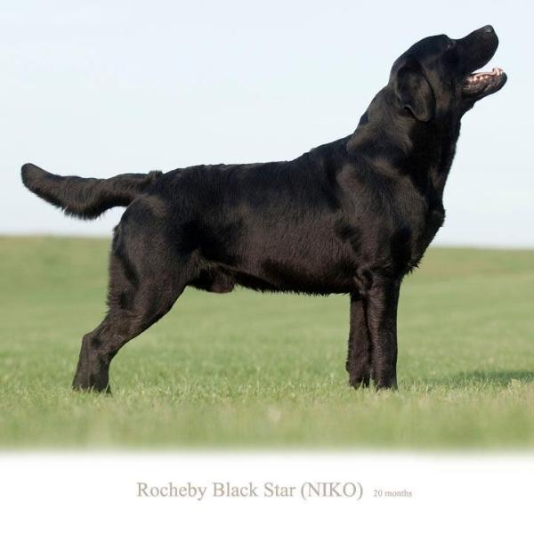 niko-today-http-okeanas-lt-niko-html-co-owner-gors