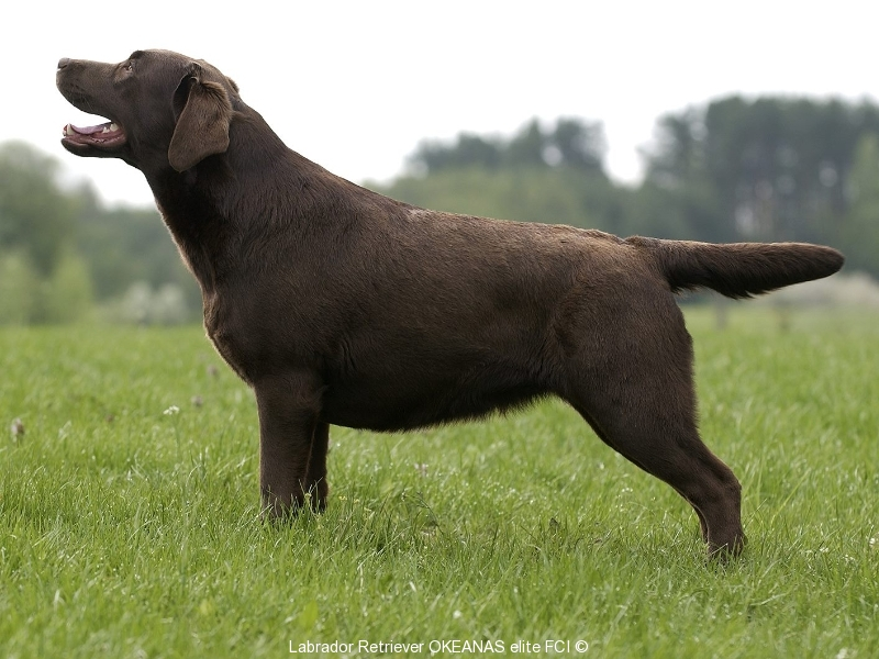 our-dogs-gabi-okeanas-female-in-age-2-years-http-w-4138361505452