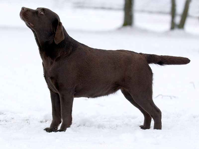 our-dogs-gabi-okeanas-female-in-age-2-years-http-w