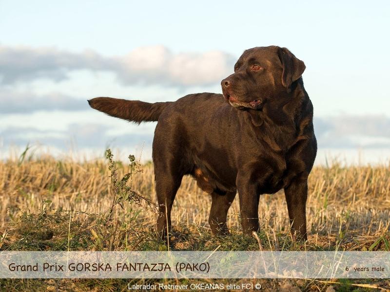our-dogs-grand-prix-gorska-fantazja-pako-65-yea