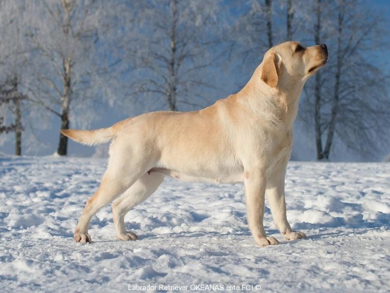our-dogs-inter-champion-kanga-gorska-fantazja-oki