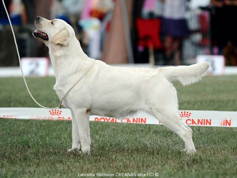 our-dogs-kalina-gorska-fantazja-kami-21-months-b