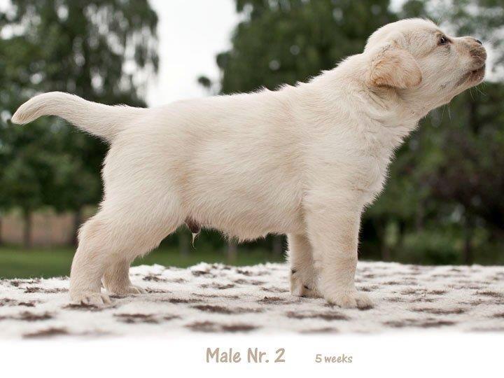 5-weeks-today-male-nr-2-http-okeanas-lt-vada_p-htm