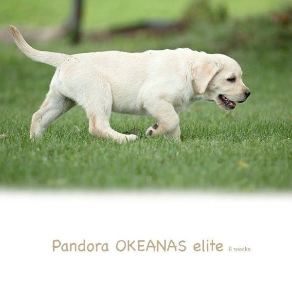 beauty-pandora-1897248999040