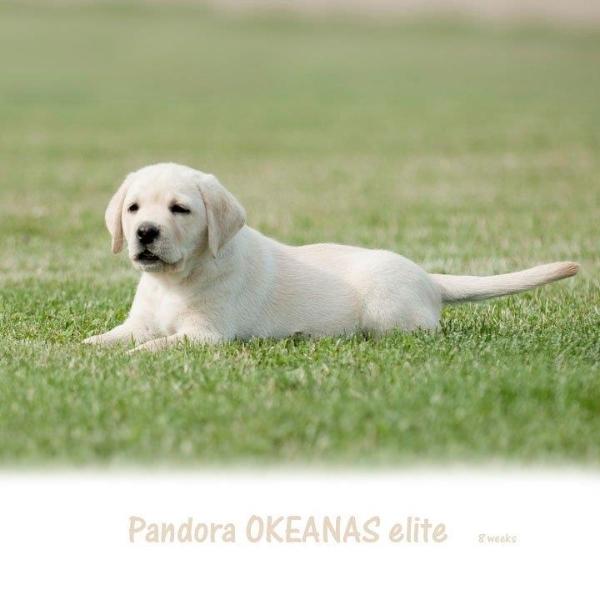 beauty-pandora