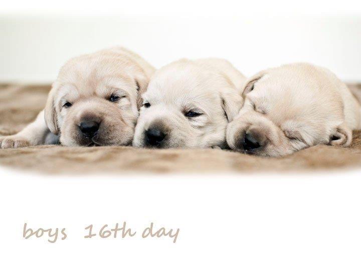 boys-boys-boys-3-3-3-3-3-3-3-3-3-3-3-3-16th-day-la