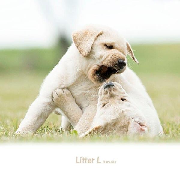 drama-sorry-litter-p