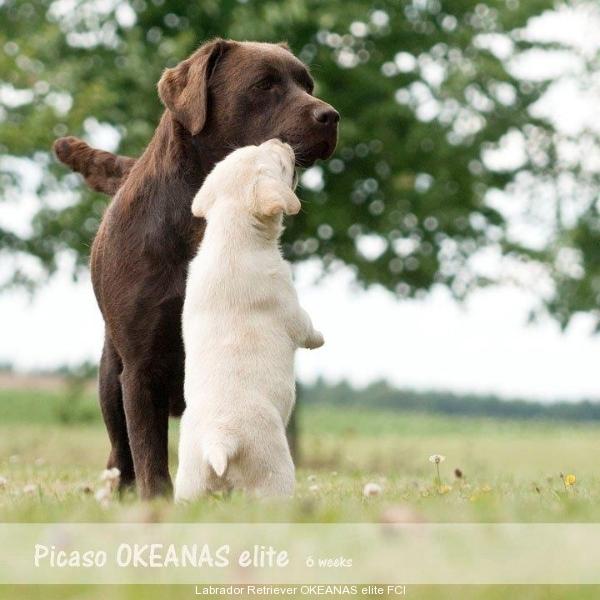 give-me-kisssssssssssssss-picaso-okeanas-e