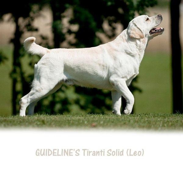 guideline-s-tiranti-solid-leo-http-okeanas-lt-le-1907154886681