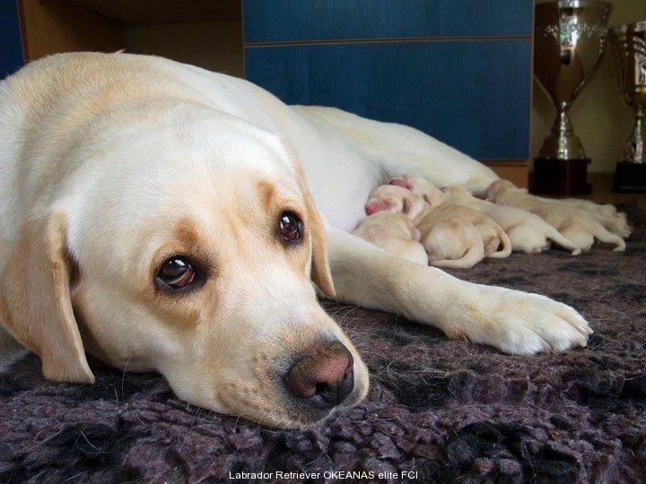 kanga-gorska-fantazja-oki-puppies-from-one-of-th
