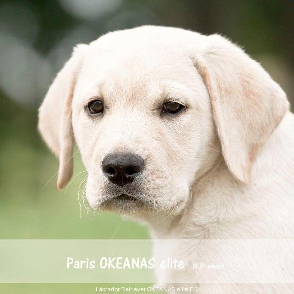 paris-okeanas-elite-105-weeks-http-okeanas-lt-vad-1934010598057