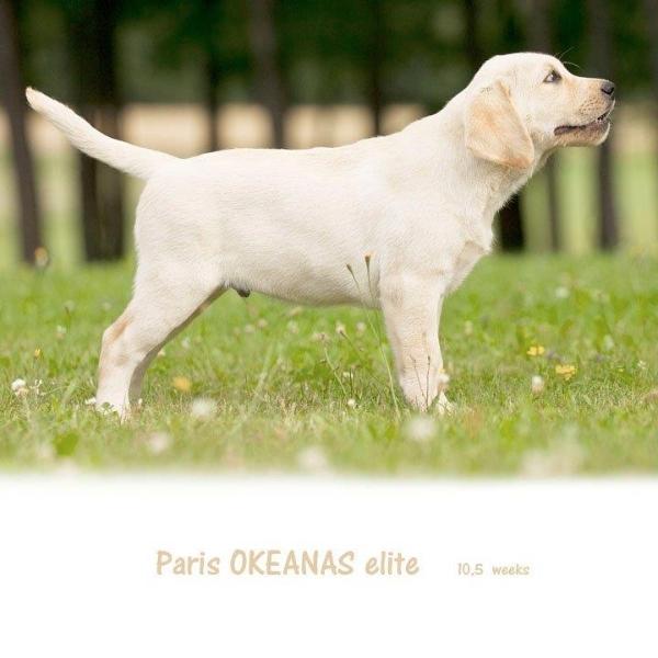 paris-okeanas-elite-105-weeks-http-okeanas-lt-vad
