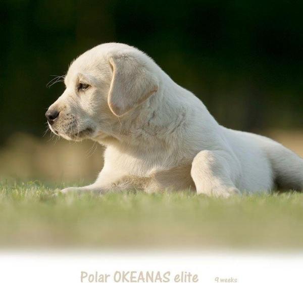 polar-okeanas-elite-http-okeanas-lt-polar-html-9-w