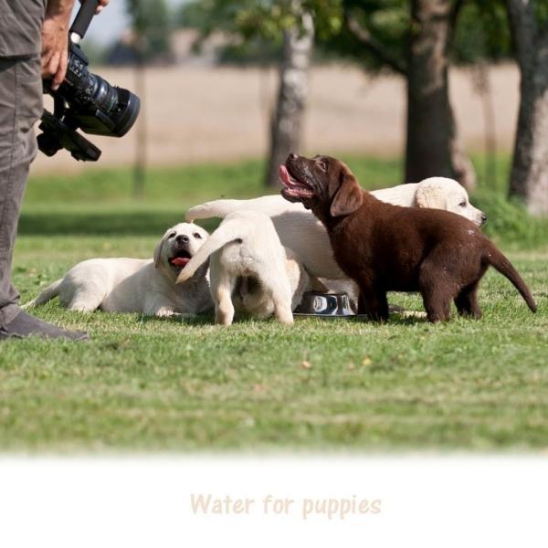puppies-tv-cinema-stars