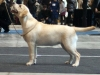 ani-today-won-bob-in-puppy-class-she-is-very-nice