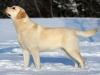 inter-champion-2009-world-dog-show-intermedia-clas
