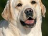 mom-inter-champion-2009-world-dog-show-intermedia