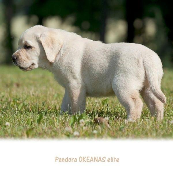 today-pandora-okeanas-elite-http-okeanas-lt-pandor-1875652099131