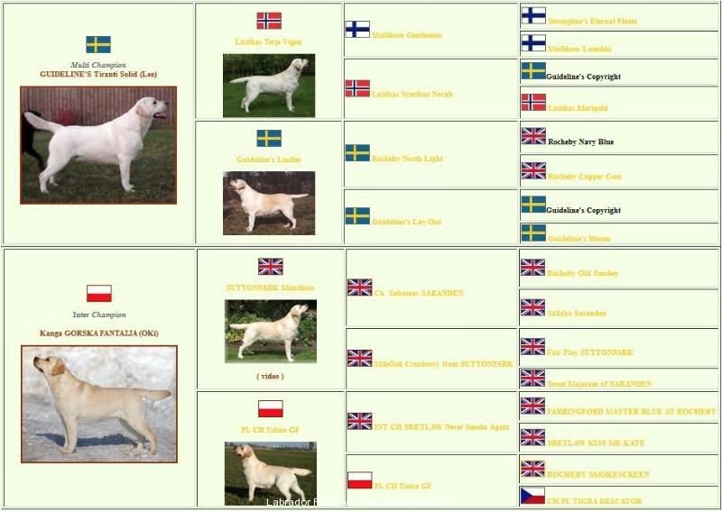 top-euro-pedigree-http-okeanas-lt-vada_p-html
