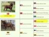 pedigree-http-okeanas-lt-vada_s-html