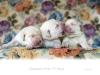 litter-v-boys-4th-day-today-www-okeanas-lt-vada_v