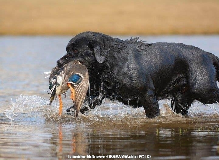 another-hunter-bruno-large-http-postimage-org-imag