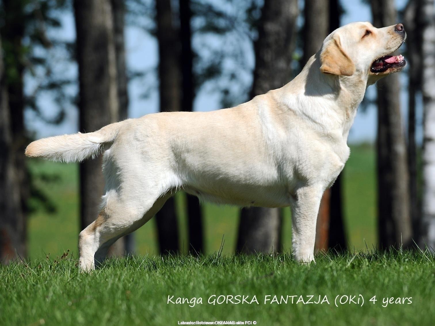 inter-champion-fci-kanga-gorska-fantazja-oki-4-y