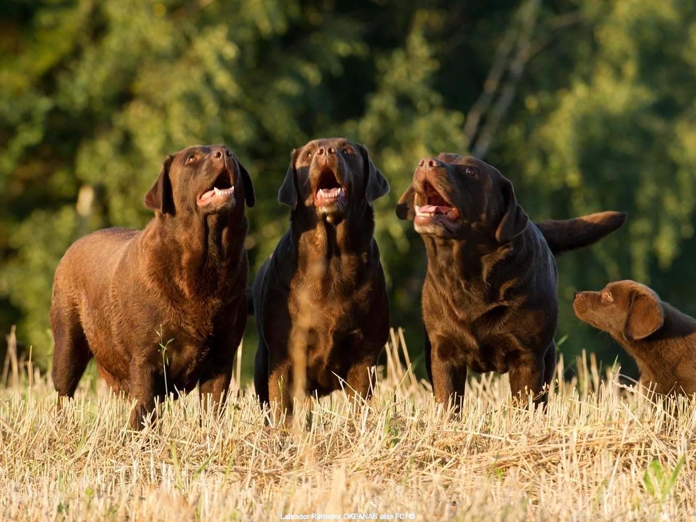 our-dogs-choco-mania-trio-3-tenors-and-student
