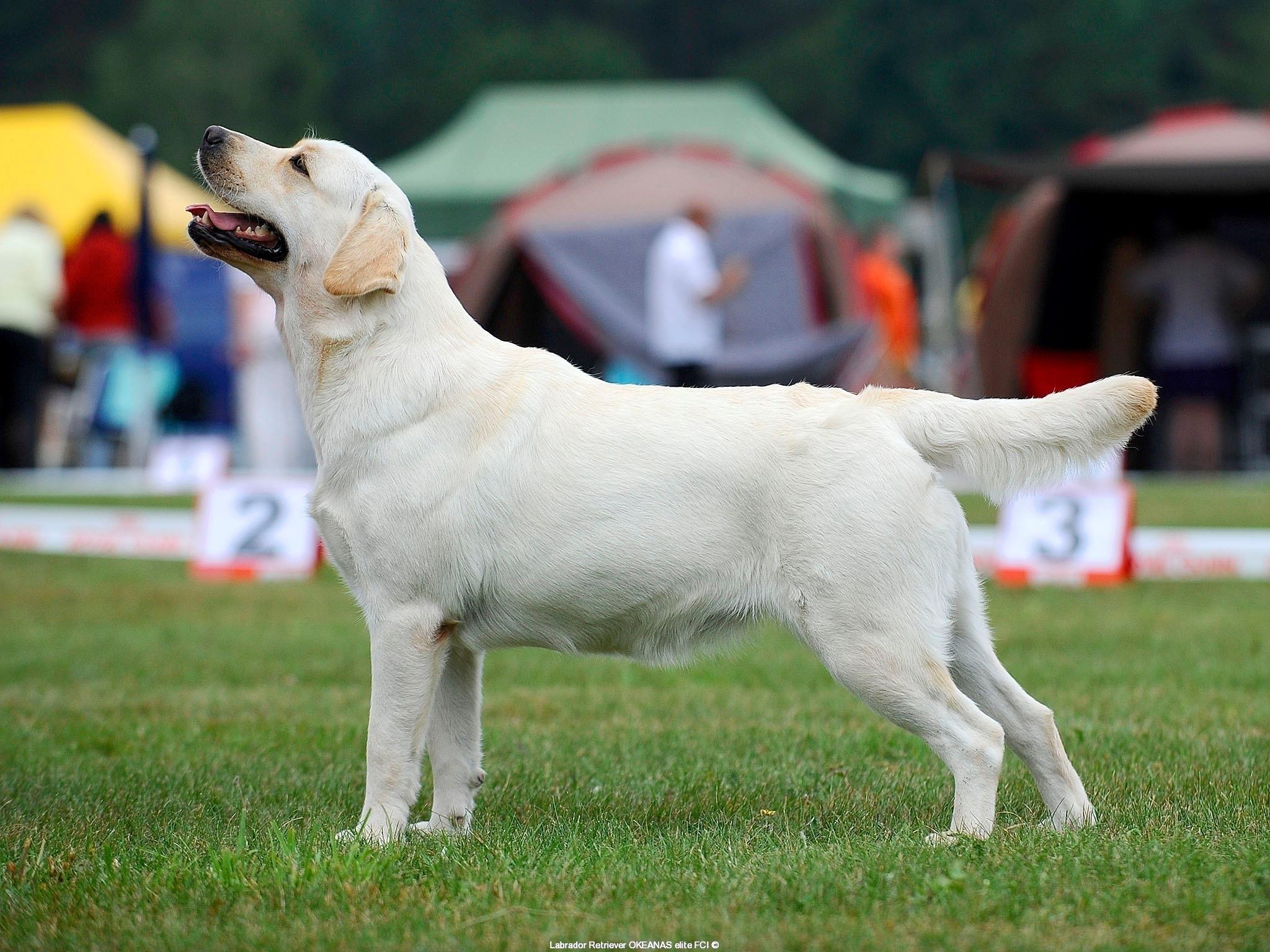 our-dogs-kalina-gorska-fantazja-kami-23-months-h