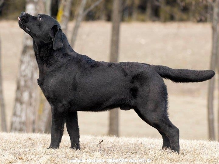 rocheby-black-star-niko-14-5-months-today-http-o-1665483685052