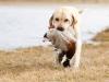 dambo-impassioned-hunter-http-www-okeanas-lt-dam