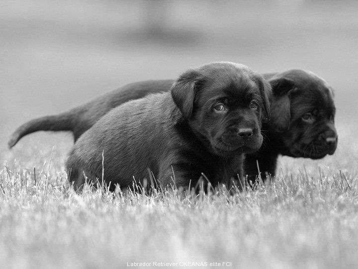 brother-s-in-black