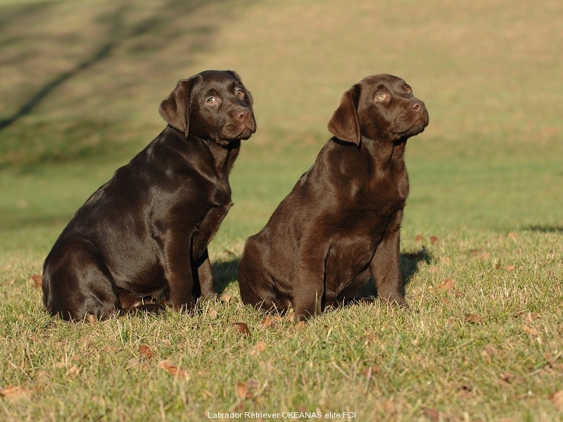 puppies-from-us-jully-and-jolli-okeanas-in-age-35