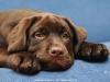puppies-from-us-lim-bizkit-okeanas-choko-http-ww