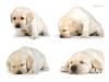 sleepy-baby-litter-v-http-www-okeanas-lt-vada_v-ht