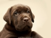 solid-puppy-album-puppies-from-us-www-okeanas-lt