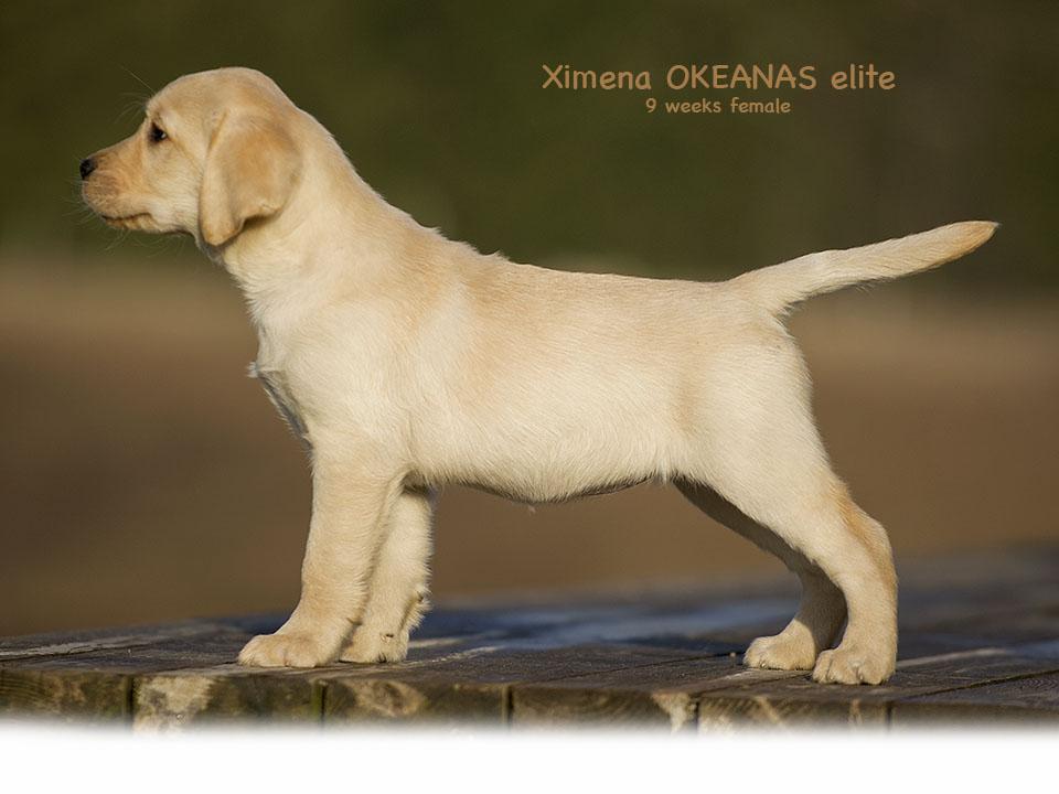 Ximena 9 weeks