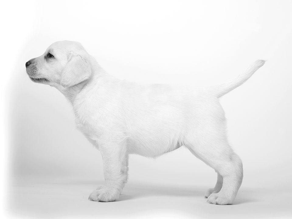 chloe 6 weeks
