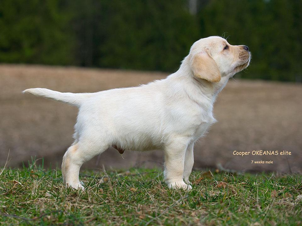 7 weeks age