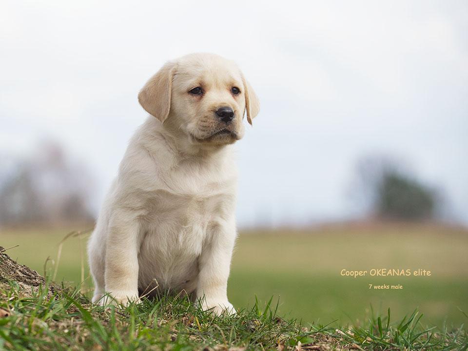 Cooper. 7 weeks